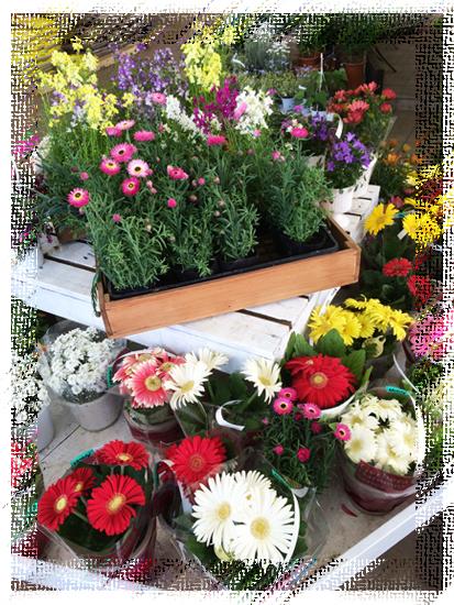 たくさんの花が競って咲いている