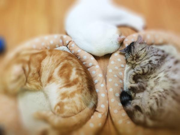 雨の日の午後はみんな眠い