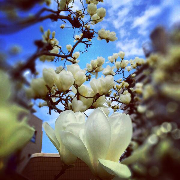 もうすぐ春 穏やかないい季節です