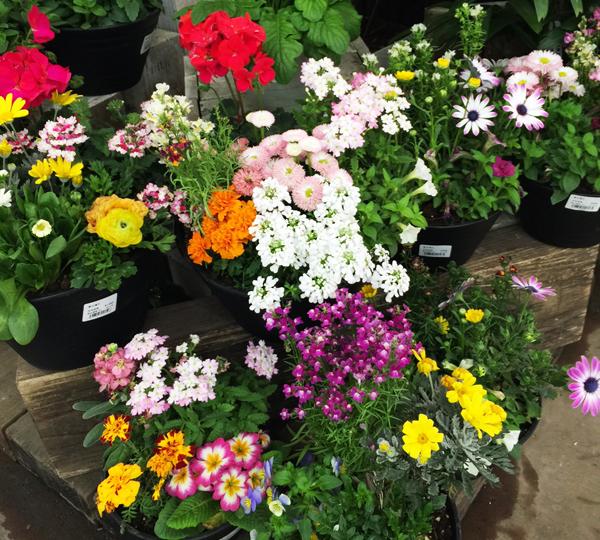 園芸コーナー この日は春のようでした