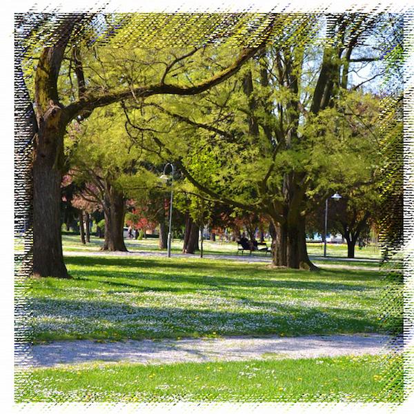 公園でも蝉の大合唱