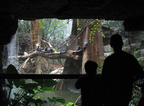 NYブロンクスZOOのジャングルワールドの展示 こういう熱帯雨林館を企画したことがあった